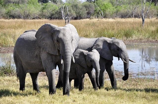 Spiritual Symbolism Of Elephants